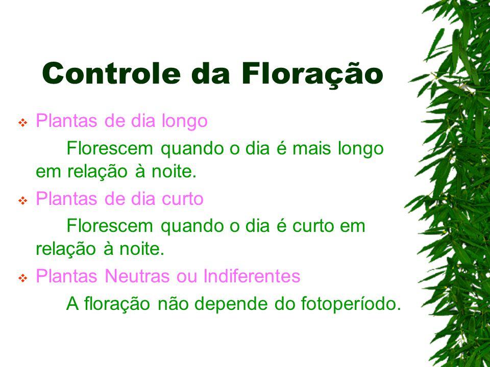 Controle da Floração  Plantas de dia longo Florescem quando o dia é mais longo em relação à noite.  Plantas de dia curto Florescem quando o dia é cu