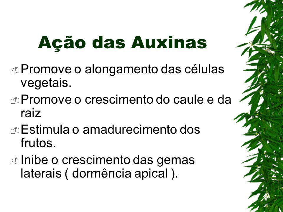 Ação das Auxinas  Promove o alongamento das células vegetais.  Promove o crescimento do caule e da raiz  Estimula o amadurecimento dos frutos.  In