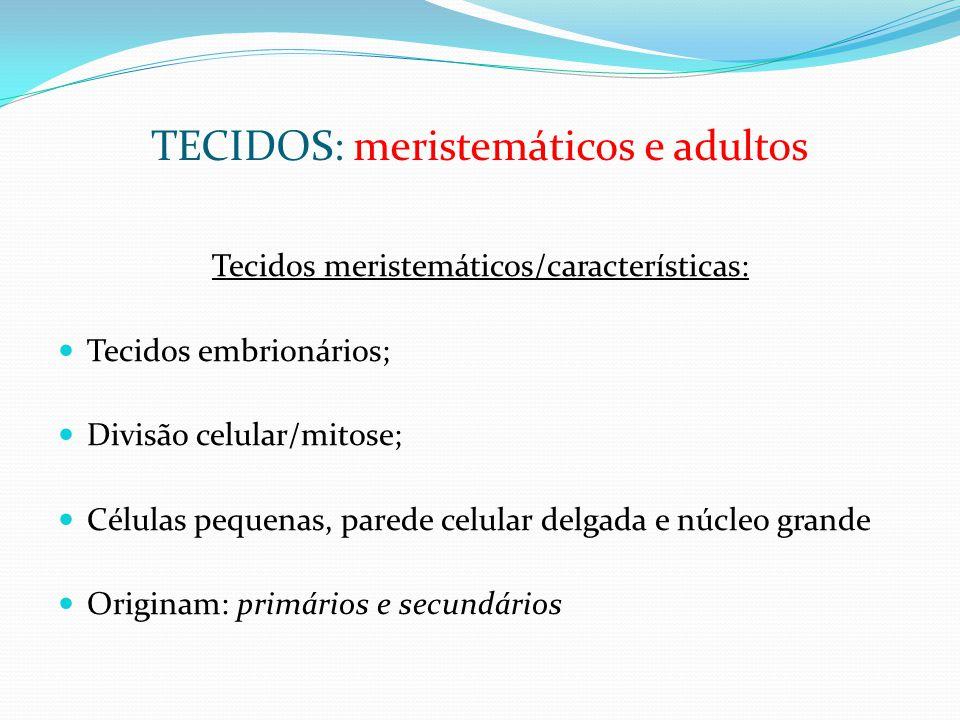 TECIDOS: meristemáticos e adultos Tecidos meristemáticos/características: Tecidos embrionários; Divisão celular/mitose; Células pequenas, parede celular delgada e núcleo grande Originam: primários e secundários