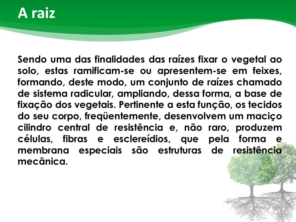 A raiz Sendo uma das finalidades das raízes fixar o vegetal ao solo, estas ramificam-se ou apresentem-se em feixes, formando, deste modo, um conjunto de raízes chamado de sistema radicular, ampliando, dessa forma, a base de fixação dos vegetais.