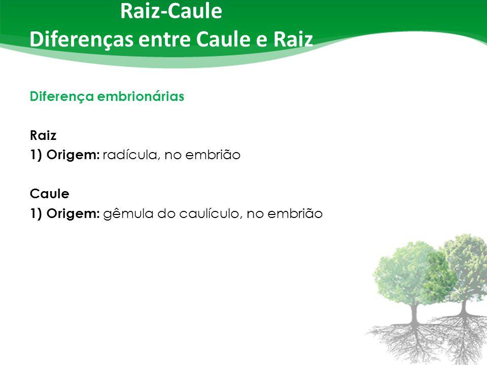 Raiz-Caule Diferenças entre Caule e Raiz Diferença embrionárias Raiz 1) Origem: radícula, no embrião Caule 1) Origem: gêmula do caulículo, no embrião