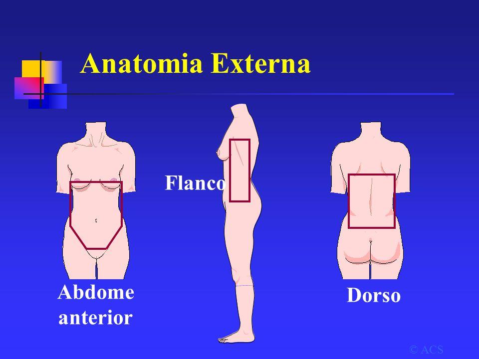 Anatomia Externa © ACS Abdome anterior Flanco Dorso