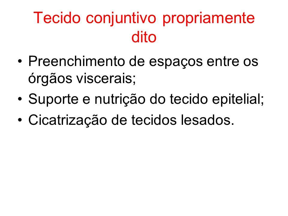 Tecido conjuntivo propriamente dito Preenchimento de espaços entre os órgãos viscerais; Suporte e nutrição do tecido epitelial; Cicatrização de tecido