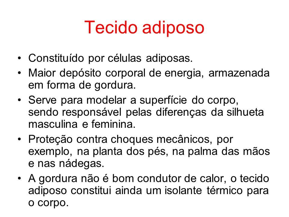 Tecido adiposo Constituído por células adiposas. Maior depósito corporal de energia, armazenada em forma de gordura. Serve para modelar a superfície d