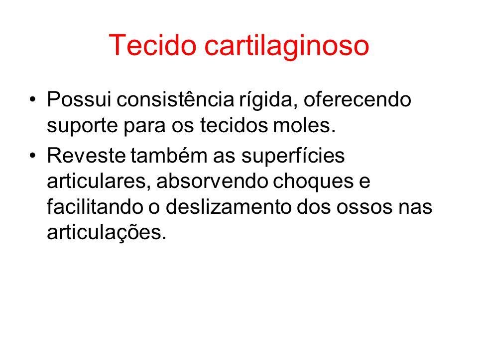 Tecido cartilaginoso Possui consistência rígida, oferecendo suporte para os tecidos moles. Reveste também as superfícies articulares, absorvendo choqu