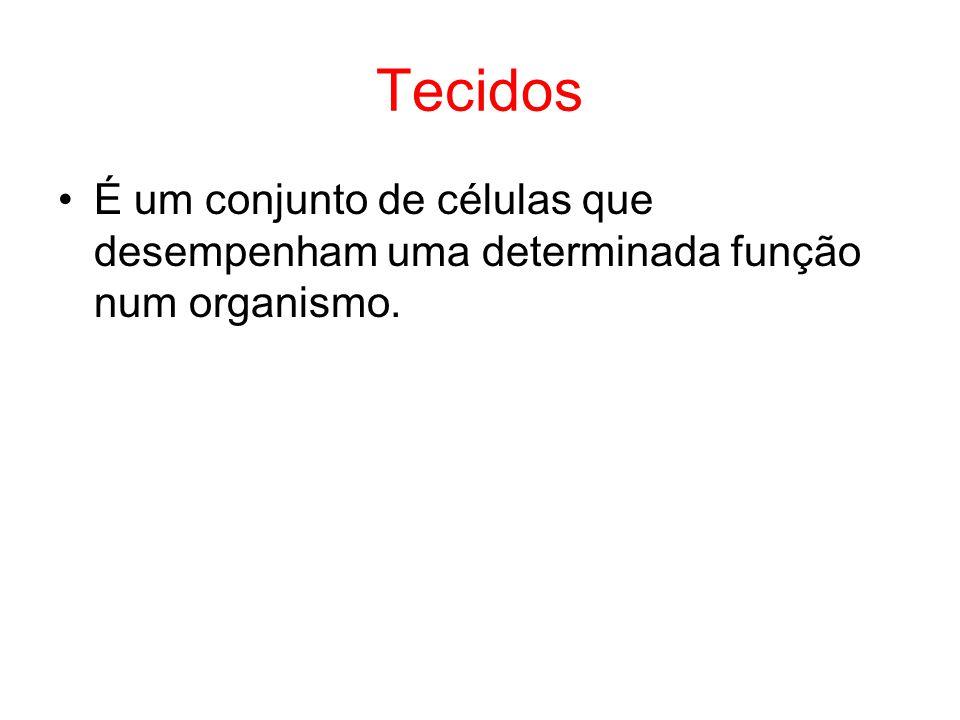 Tecidos É um conjunto de células que desempenham uma determinada função num organismo.