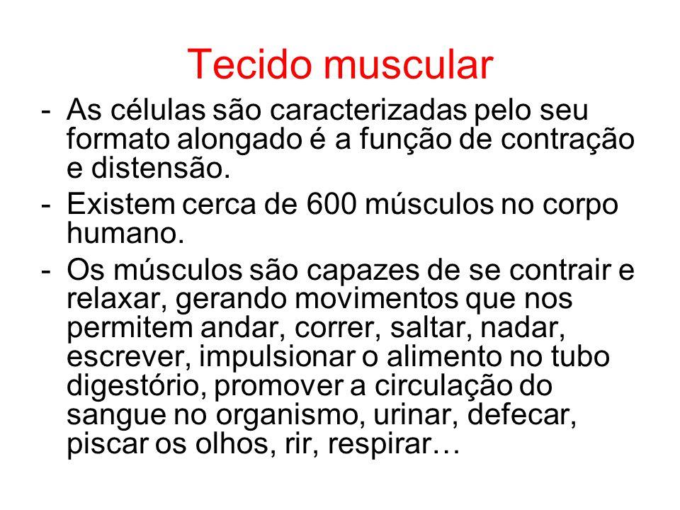 Tecido muscular -As células são caracterizadas pelo seu formato alongado é a função de contração e distensão. -Existem cerca de 600 músculos no corpo