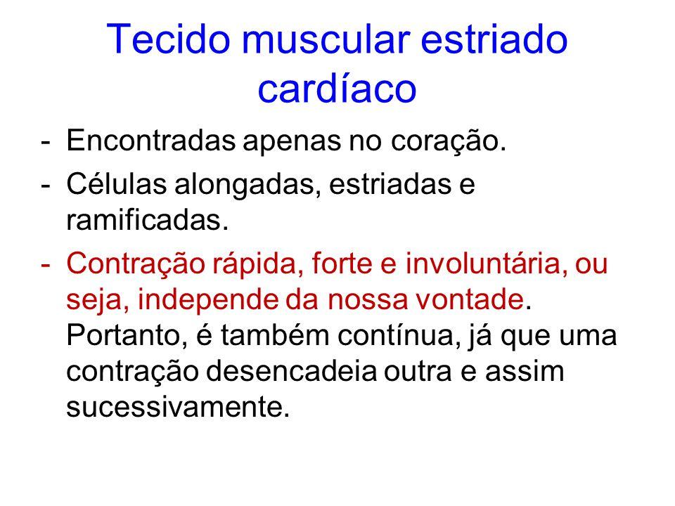 Tecido muscular estriado cardíaco -Encontradas apenas no coração. -Células alongadas, estriadas e ramificadas. -Contração rápida, forte e involuntária