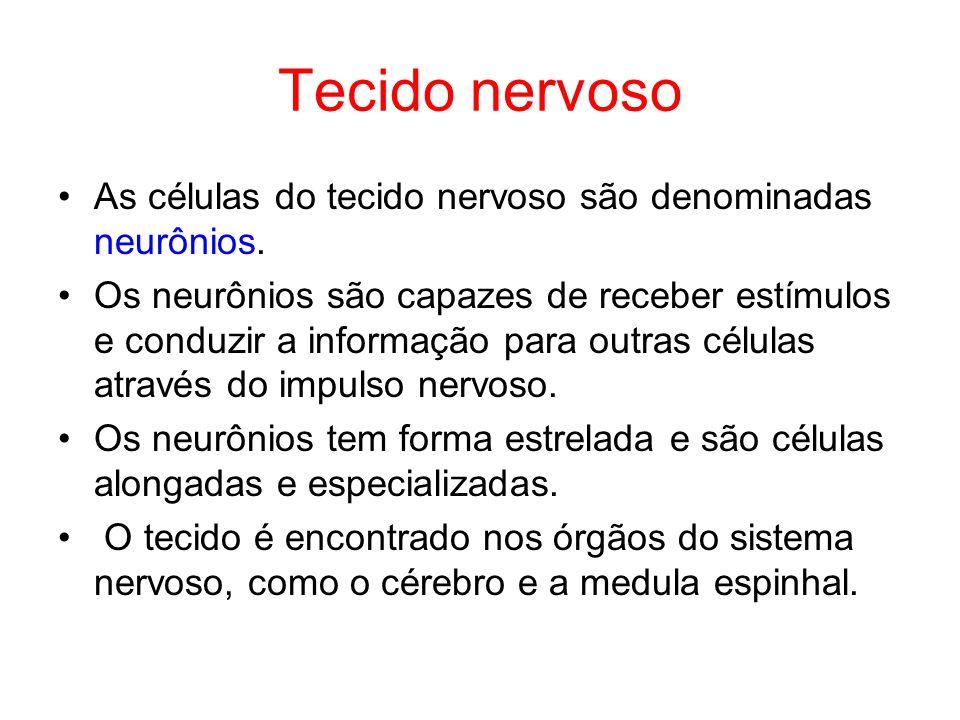 Tecido nervoso As células do tecido nervoso são denominadas neurônios. Os neurônios são capazes de receber estímulos e conduzir a informação para outr