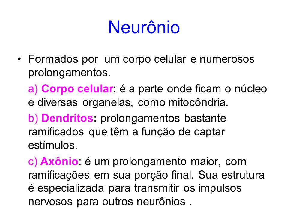 Neurônio Formados por um corpo celular e numerosos prolongamentos. a) Corpo celular: é a parte onde ficam o núcleo e diversas organelas, como mitocônd
