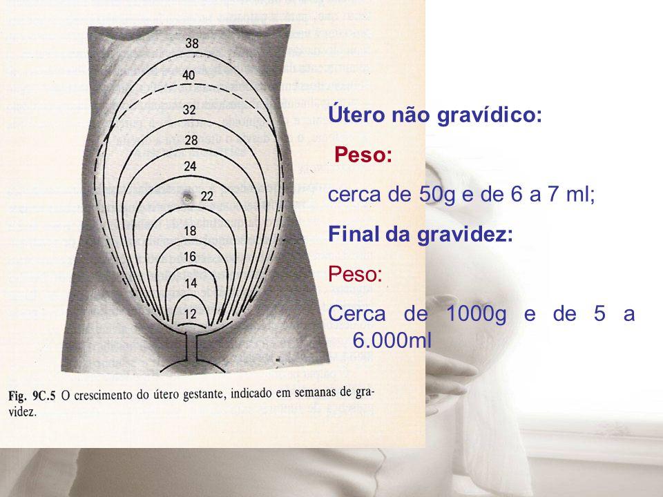 Útero não gravídico: Peso: cerca de 50g e de 6 a 7 ml; Final da gravidez: Peso: Cerca de 1000g e de 5 a 6.000ml