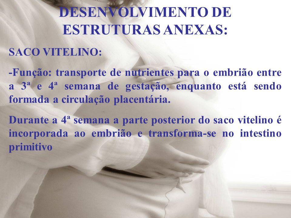 DESENVOLVIMENTO DE ESTRUTURAS ANEXAS: SACO VITELINO: -Função: transporte de nutrientes para o embrião entre a 3ª e 4ª semana de gestação, enquanto est