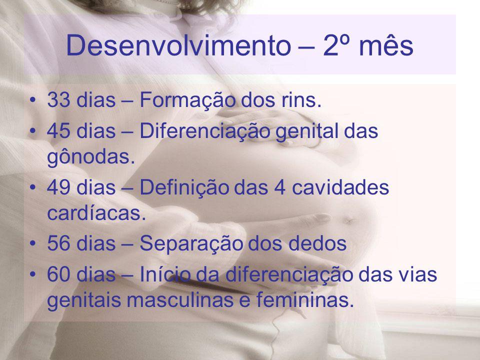 33 dias – Formação dos rins. 45 dias – Diferenciação genital das gônodas. 49 dias – Definição das 4 cavidades cardíacas. 56 dias – Separação dos dedos