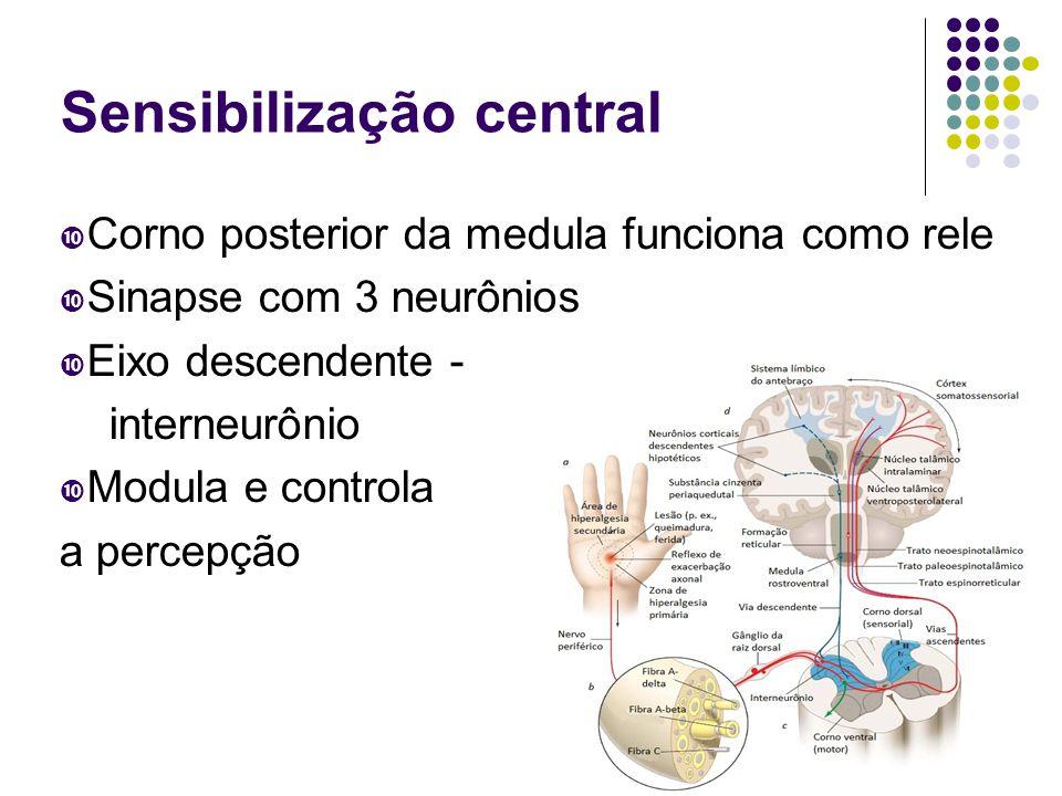 Sensibilização central  Corno posterior da medula funciona como rele  Sinapse com 3 neurônios  Eixo descendente - interneurônio  Modula e controla a percepção