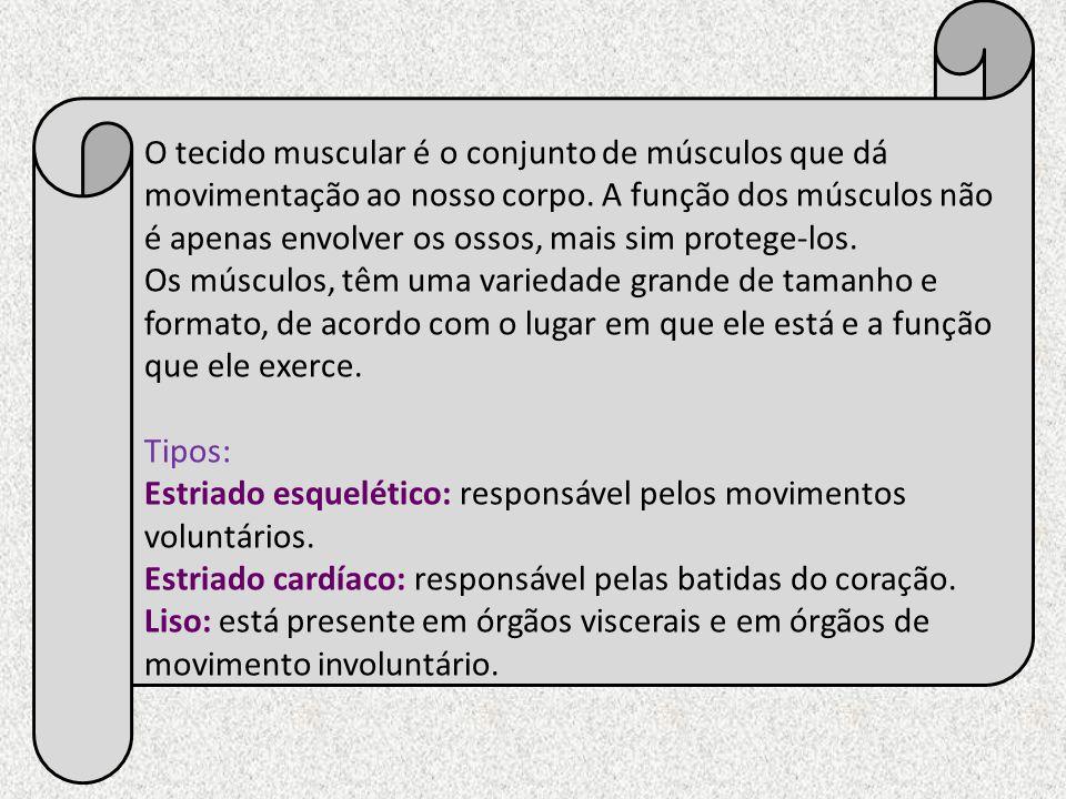 O tecido muscular é o conjunto de músculos que dá movimentação ao nosso corpo. A função dos músculos não é apenas envolver os ossos, mais sim protege-