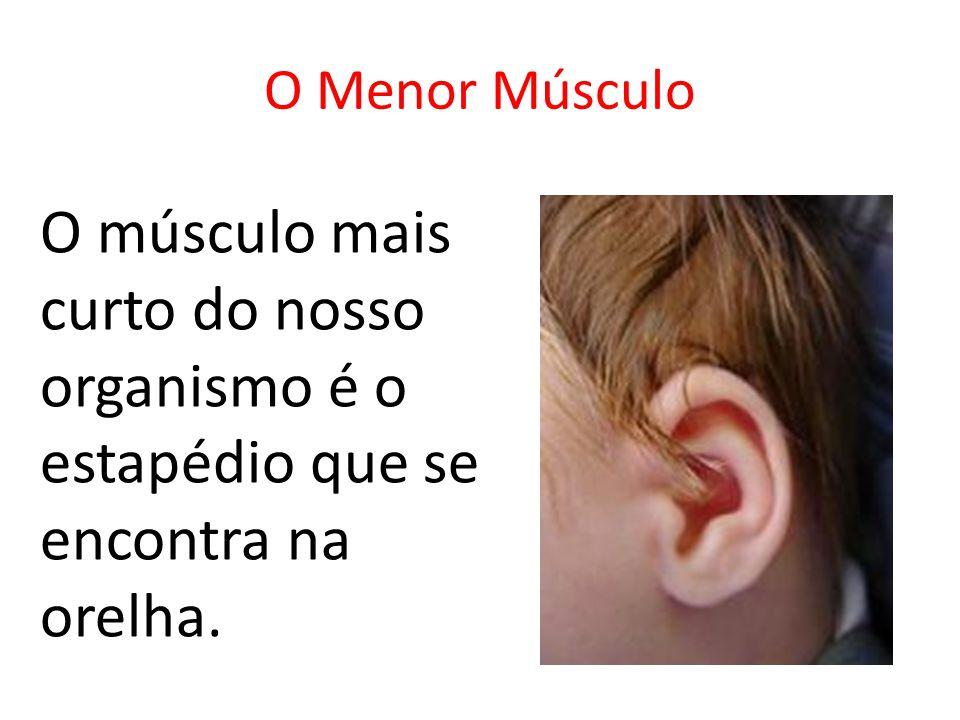 O Menor Músculo O músculo mais curto do nosso organismo é o estapédio que se encontra na orelha.