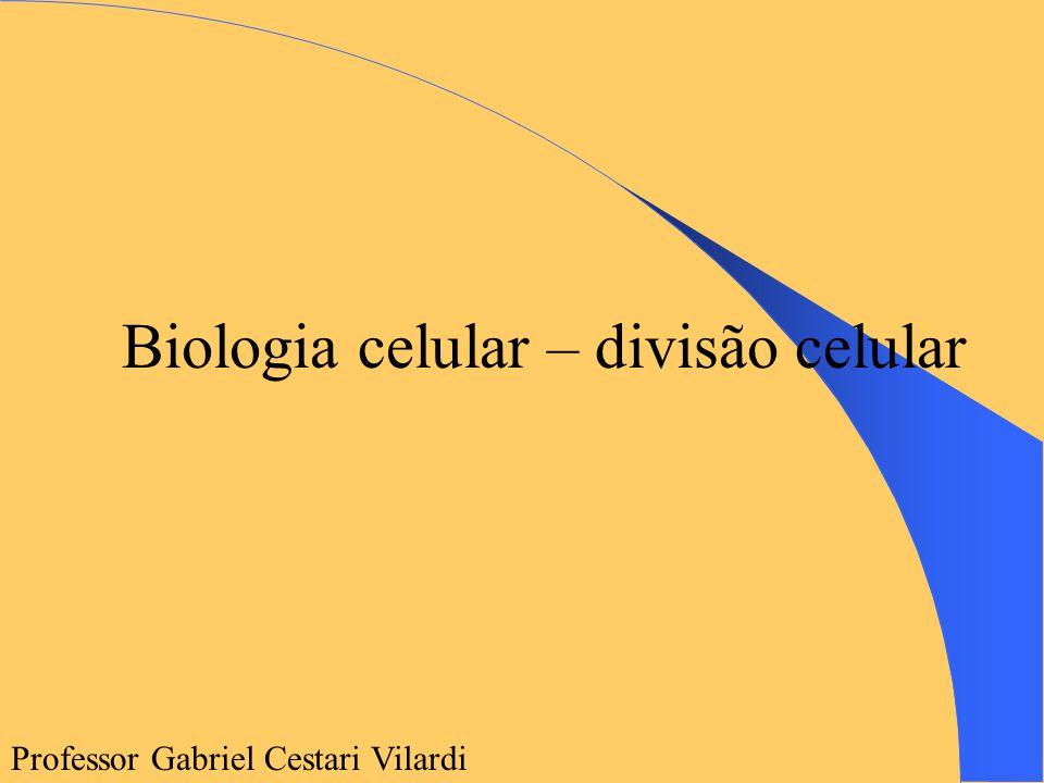Biologia celular – divisão celular Professor Gabriel Cestari Vilardi