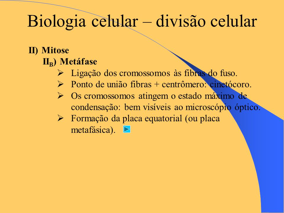 Biologia celular – divisão celular II) Mitose II B ) Metáfase  Ligação dos cromossomos às fibras do fuso.
