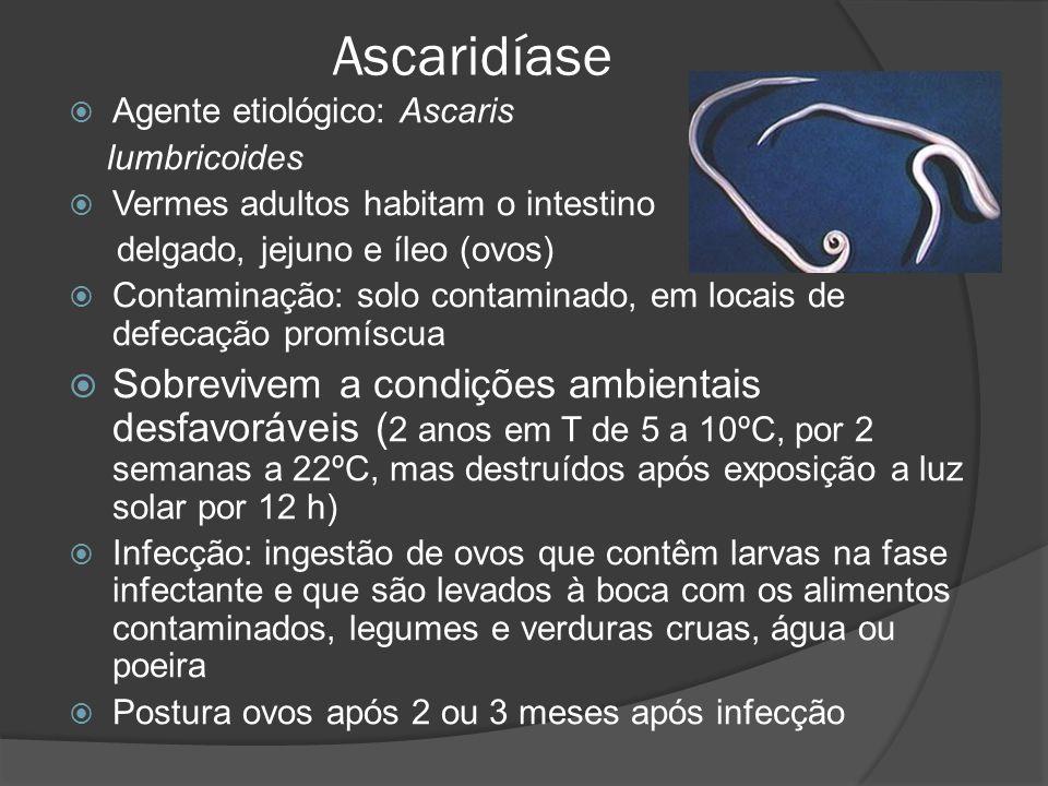 Ascaridíase  Agente etiológico: Ascaris lumbricoides  Vermes adultos habitam o intestino delgado, jejuno e íleo (ovos)  Contaminação: solo contaminado, em locais de defecação promíscua  Sobrevivem a condições ambientais desfavoráveis ( 2 anos em T de 5 a 10ºC, por 2 semanas a 22ºC, mas destruídos após exposição a luz solar por 12 h)  Infecção: ingestão de ovos que contêm larvas na fase infectante e que são levados à boca com os alimentos contaminados, legumes e verduras cruas, água ou poeira  Postura ovos após 2 ou 3 meses após infecção