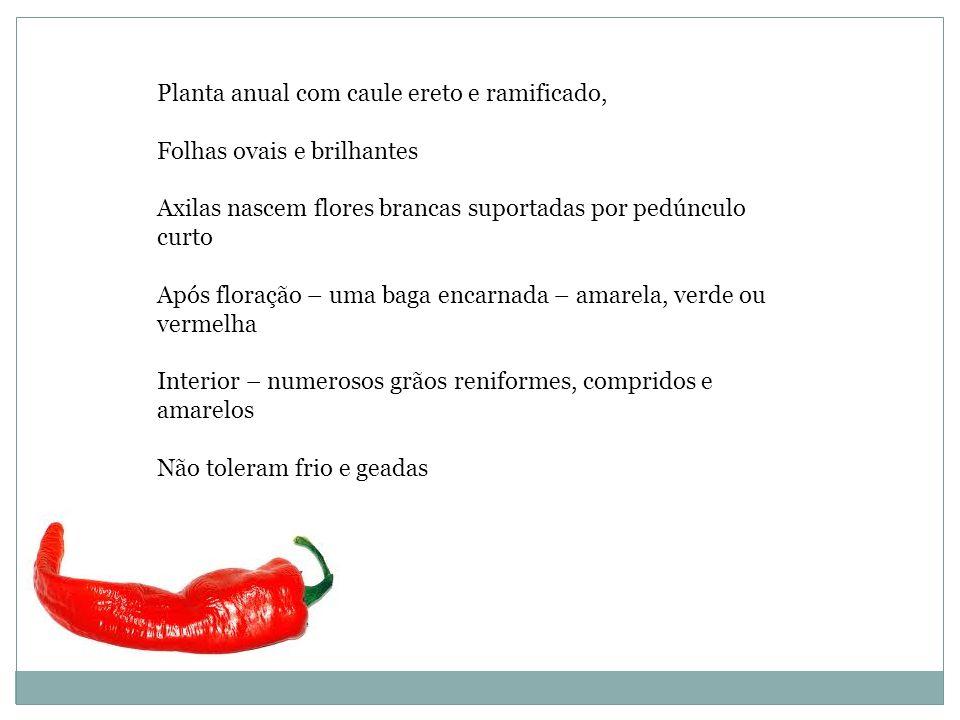 Produtos a base de pimenta encontrados na Farmácia -Extratos - Tinturas -Ungüentos -Emplastos – efeitos rubificantes sobre pele e mucosas.