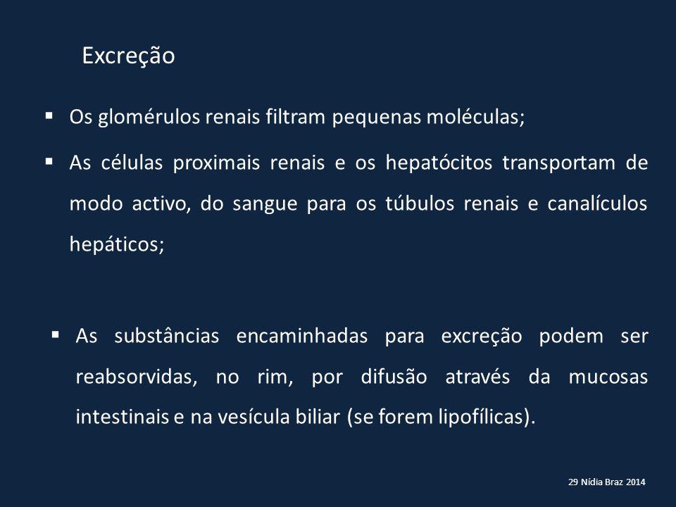 29 Nídia Braz 2014 Excreção  Os glomérulos renais filtram pequenas moléculas;  As células proximais renais e os hepatócitos transportam de modo acti