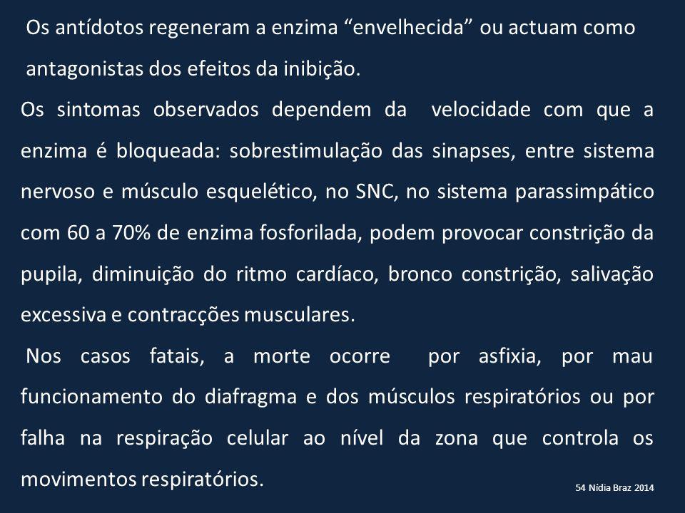 54 Nídia Braz 2014 Os sintomas observados dependem da velocidade com que a enzima é bloqueada: sobrestimulação das sinapses, entre sistema nervoso e m