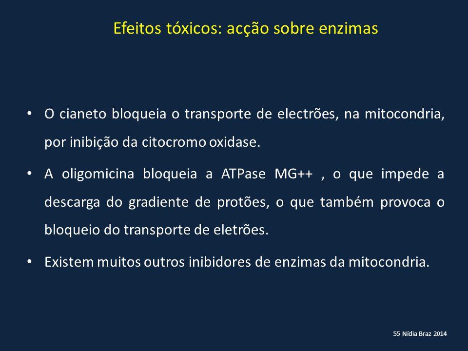 55 Nídia Braz 2014 Efeitos tóxicos: acção sobre enzimas O cianeto bloqueia o transporte de electrões, na mitocondria, por inibição da citocromo oxidas
