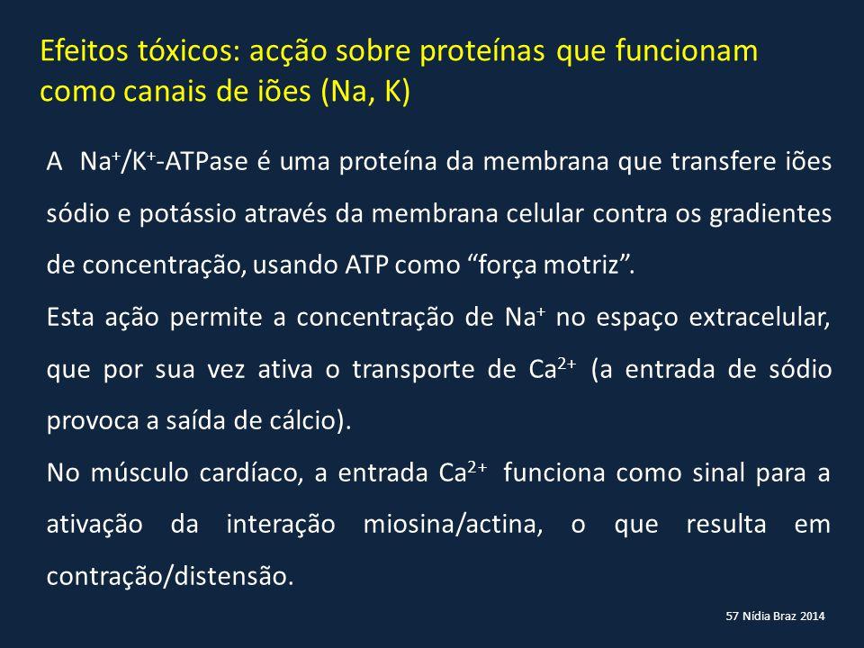 57 Nídia Braz 2014 Efeitos tóxicos: acção sobre proteínas que funcionam como canais de iões (Na, K) A Na + /K + -ATPase é uma proteína da membrana que