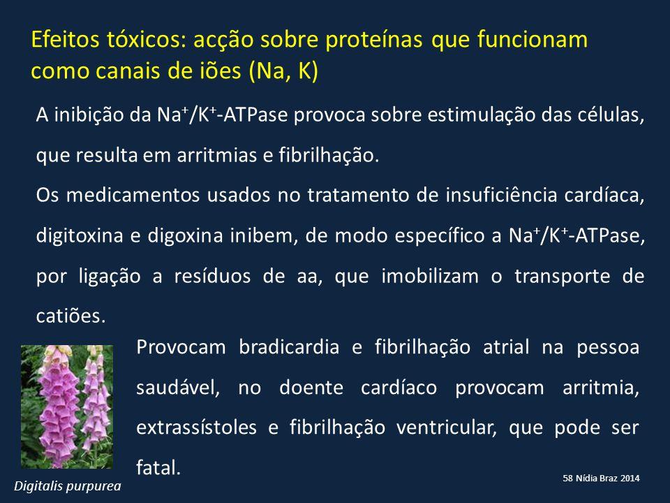 58 Nídia Braz 2014 Efeitos tóxicos: acção sobre proteínas que funcionam como canais de iões (Na, K) A inibição da Na + /K + -ATPase provoca sobre esti
