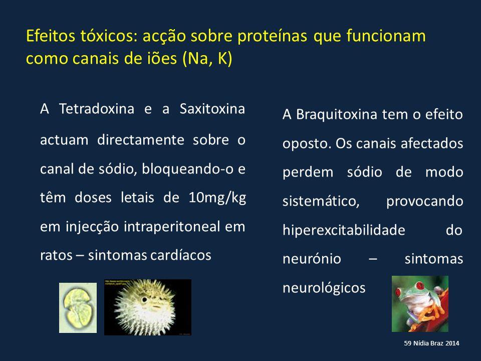 59 Nídia Braz 2014 Efeitos tóxicos: acção sobre proteínas que funcionam como canais de iões (Na, K) A Tetradoxina e a Saxitoxina actuam directamente s