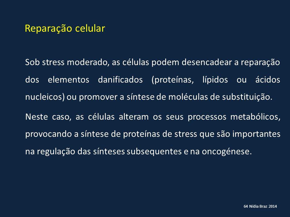 64 Nídia Braz 2014 Reparação celular Sob stress moderado, as células podem desencadear a reparação dos elementos danificados (proteínas, lípidos ou ác