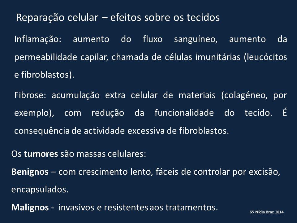 65 Nídia Braz 2014 Reparação celular – efeitos sobre os tecidos Inflamação: aumento do fluxo sanguíneo, aumento da permeabilidade capilar, chamada de