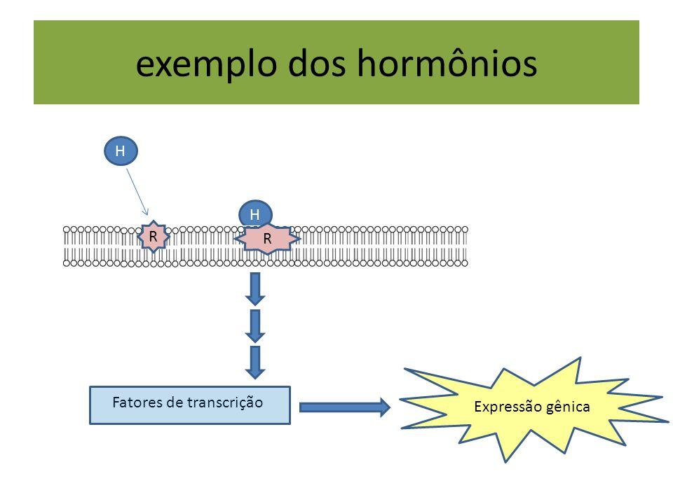 H exemplo dos hormônios H Fatores de transcrição Expressão gênica R R