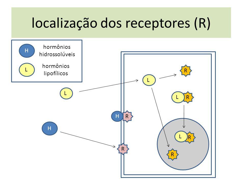 localização dos receptores (R) hormônios lipofílicos hormônios hidrossolúveis H L R H H R R R L L R R L L