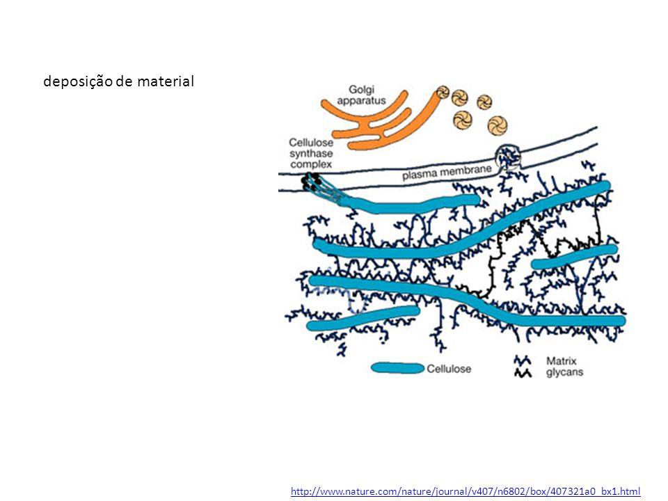 http://www.nature.com/nature/journal/v407/n6802/box/407321a0_bx1.html deposição de material