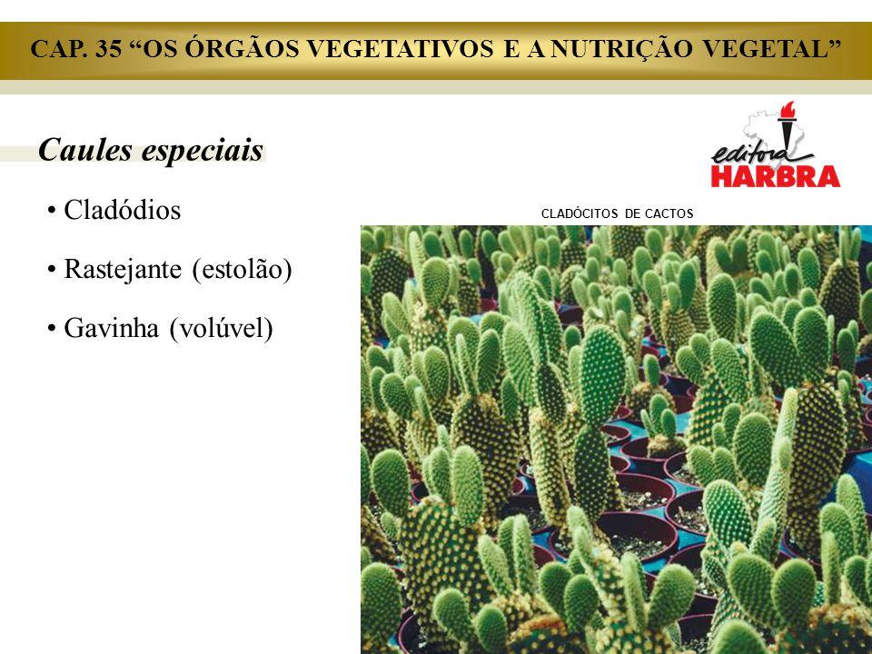 """Caules especiais Cladódios Rastejante (estolão) Gavinha (volúvel) CLADÓCITOS DE CACTOS CAP. 35 """"OS ÓRGÃOS VEGETATIVOS E A NUTRIÇÃO VEGETAL"""""""