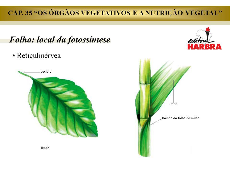 """Folha: local da fotossíntese Reticulinérvea pecíolo limbo bainha da folha de milho CAP. 35 """"OS ÓRGÃOS VEGETATIVOS E A NUTRIÇÃO VEGETAL"""""""