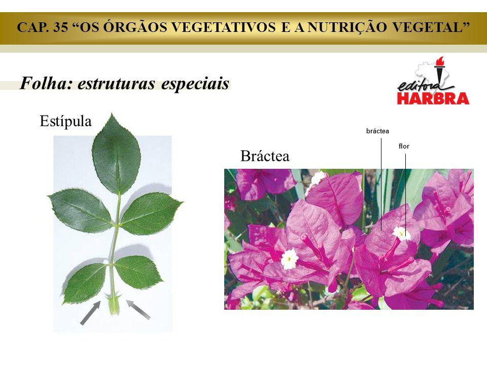 """Folha: estruturas especiais bráctea flor Bráctea Estípula CAP. 35 """"OS ÓRGÃOS VEGETATIVOS E A NUTRIÇÃO VEGETAL"""""""
