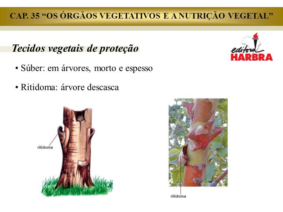 """Tecidos vegetais de proteção Súber: em árvores, morto e espesso Ritidoma: árvore descasca ritidoma CAP. 35 """"OS ÓRGÃOS VEGETATIVOS E A NUTRIÇÃO VEGETAL"""