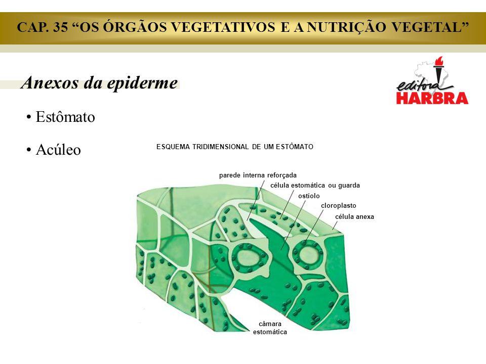 Anexos da epiderme Estômato Acúleo parede interna reforçada célula estomática ou guarda ostíolo cloroplasto célula anexa câmara estomática ESQUEMA TRI
