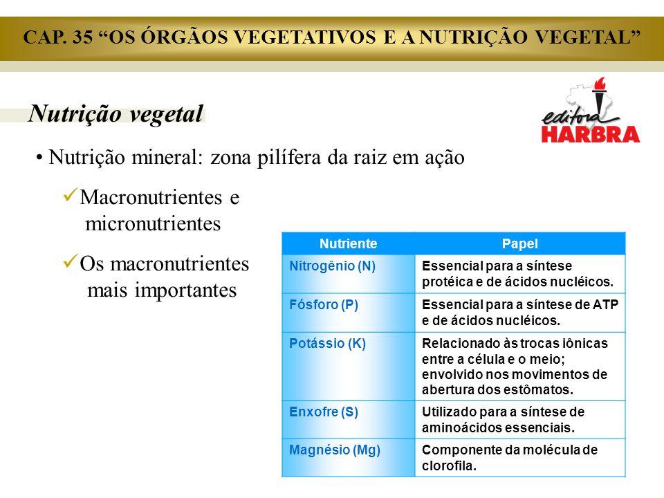 Nutrição vegetal Nutrição mineral: zona pilífera da raiz em ação Macronutrientes e..micronutrientes Os macronutrientes.. mais importantes NutrientePap