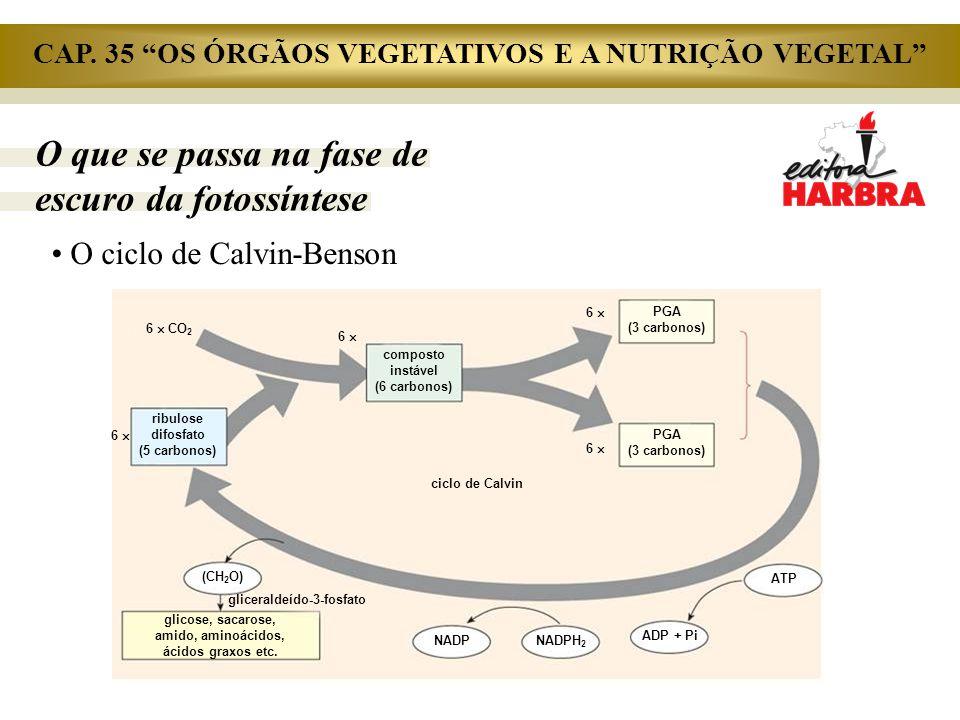 O que se passa na fase de escuro da fotossíntese O ciclo de Calvin-Benson 6  CO 2 6  composto instável (6 carbonos) 6  PGA (3 carbonos) ATP ADP + P