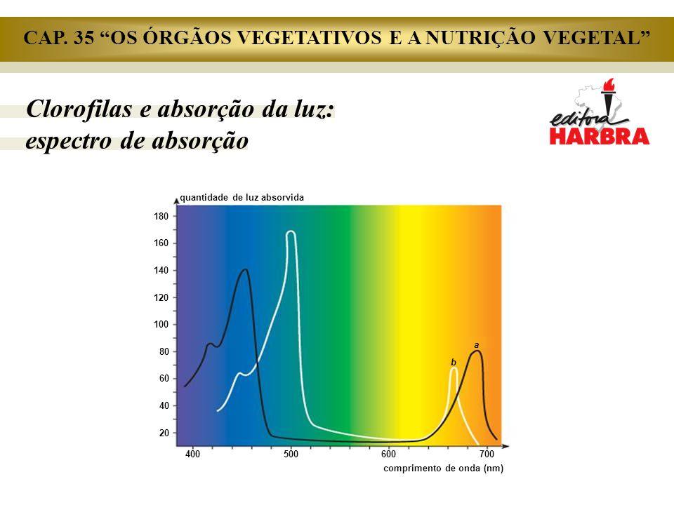 Clorofilas e absorção da luz: espectro de absorção comprimento de onda (nm) 180 160 140 120 100 80 60 40 20 quantidade de luz absorvida 400500600 700