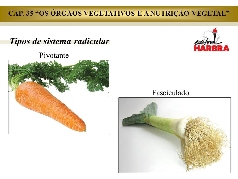 """Tipos de sistema radicular Fasciculado Pivotante CAP. 35 """"OS ÓRGÃOS VEGETATIVOS E A NUTRIÇÃO VEGETAL"""""""