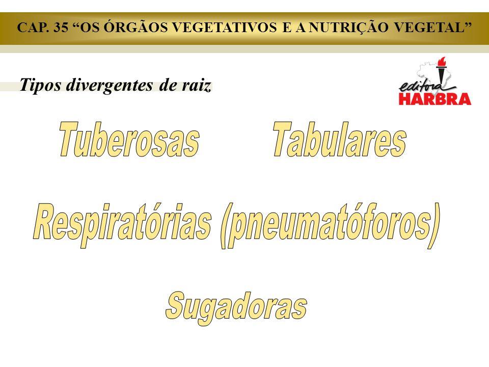 """Tipos divergentes de raiz CAP. 35 """"OS ÓRGÃOS VEGETATIVOS E A NUTRIÇÃO VEGETAL"""""""