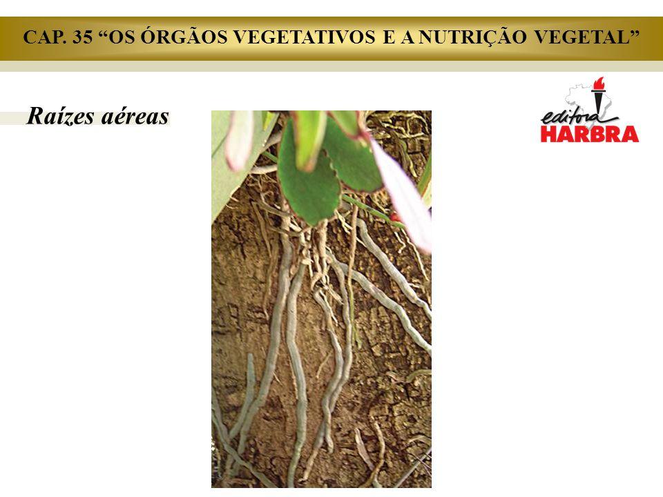 """Raízes aéreas CAP. 35 """"OS ÓRGÃOS VEGETATIVOS E A NUTRIÇÃO VEGETAL"""""""
