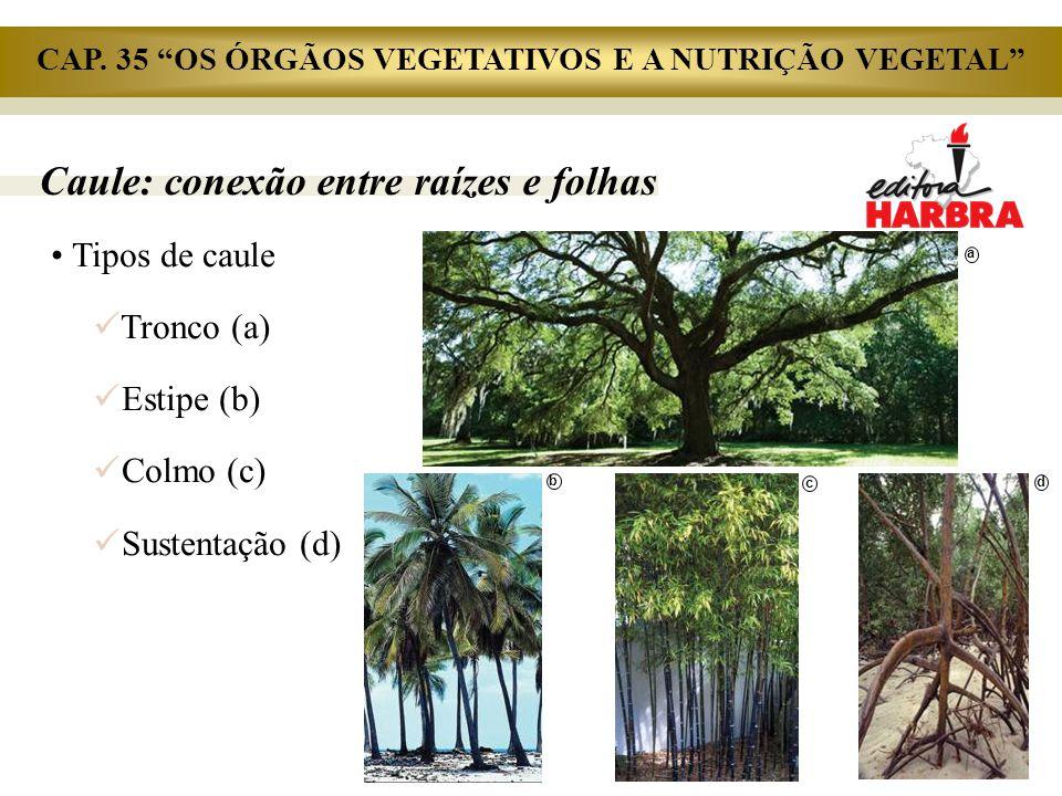 """Caule: conexão entre raízes e folhas Tipos de caule Tronco (a) Estipe (b) Colmo (c) Sustentação (d) a b c d CAP. 35 """"OS ÓRGÃOS VEGETATIVOS E A NUTRIÇÃ"""