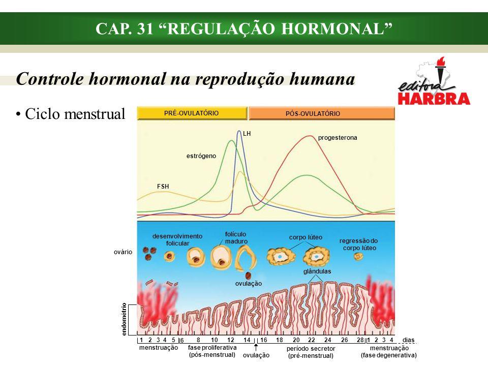 """CAP. 31 """"REGULAÇÃO HORMONAL"""" Controle hormonal na reprodução humana Ciclo menstrual menstruação (fase degenerativa) PRÉ-OVULATÓRIO PÓS-OVULATÓRIO LH F"""