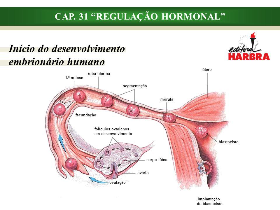"""CAP. 31 """"REGULAÇÃO HORMONAL"""" Início do desenvolvimento embrionário humano implantação do blastocisto blastocisto útero mórula segmentação tuba uterina"""
