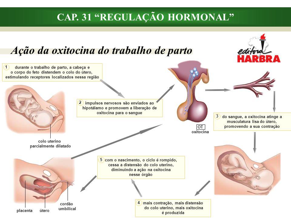 """OT oxitocina CAP. 31 """"REGULAÇÃO HORMONAL"""" Ação da oxitocina do trabalho de parto durante o trabalho de parto, a cabeça e o corpo do feto distendem o c"""